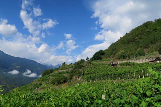 山に囲まれた畑。